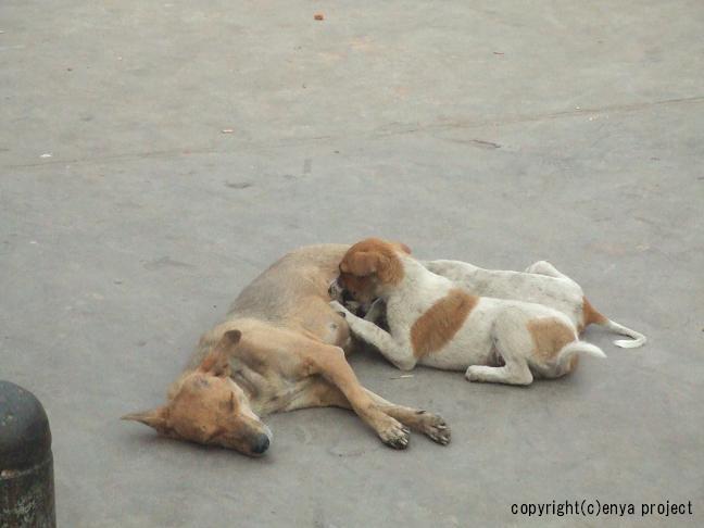 family dog1, family, family